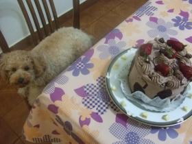 ウ~ケーキだ~