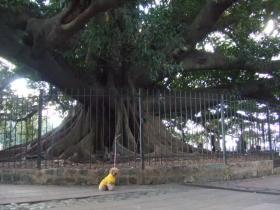 こんな大きな木が生えています
