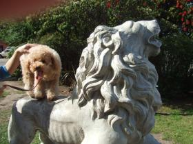 市役所1ライオン像