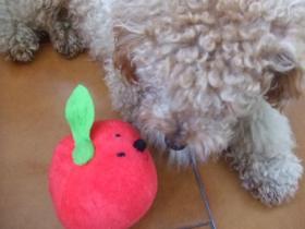 トマトボールちゃん3