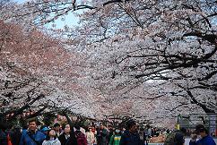 上野公園8