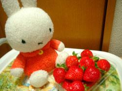 ミッフィーとイチゴ