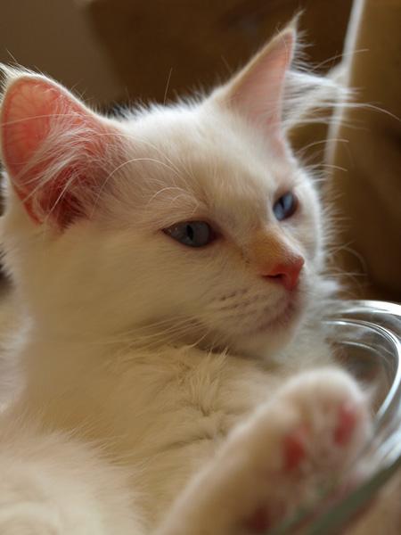 cat014.jpg