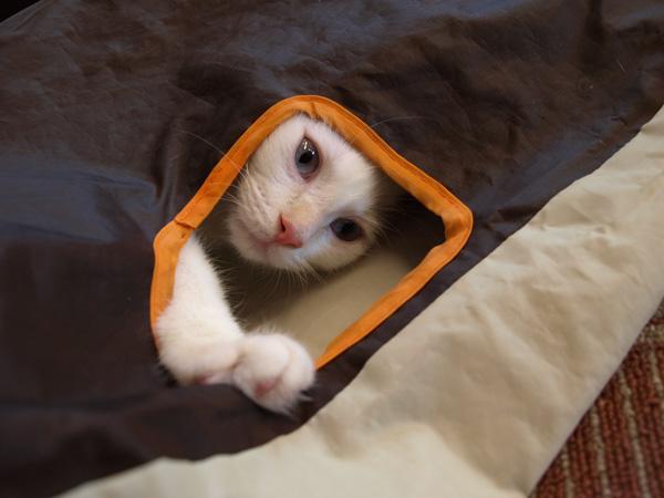 cat017.jpg