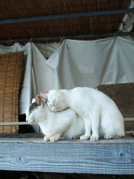 cat021.jpg