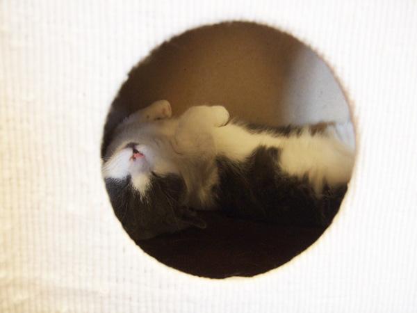 cat023.jpg