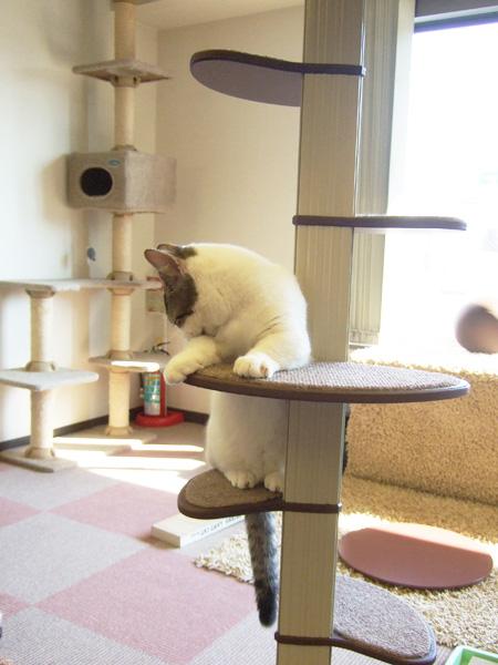 cat026.jpg