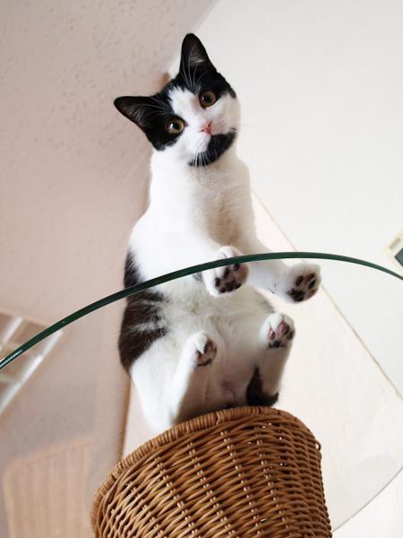 cat033.jpg