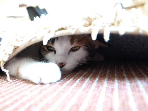 cat034.jpg
