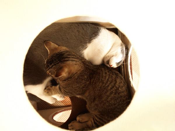 cat035.jpg