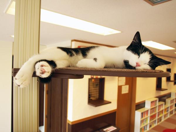 cat036.jpg