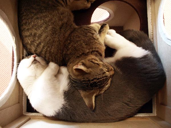 cat037.jpg