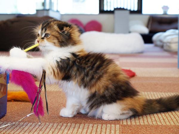 cat038.jpg