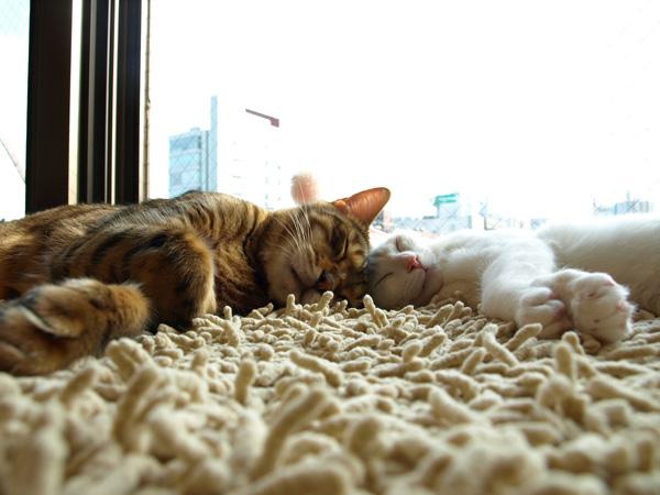 cat039.jpg
