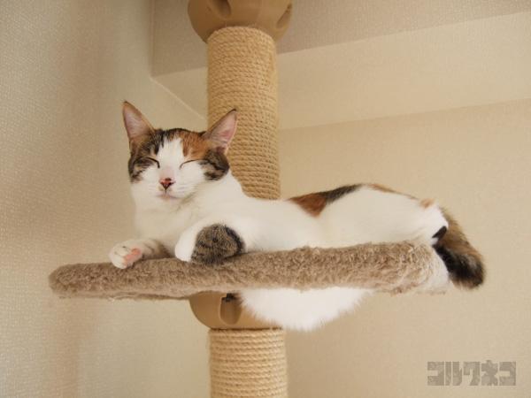 cat050.jpg
