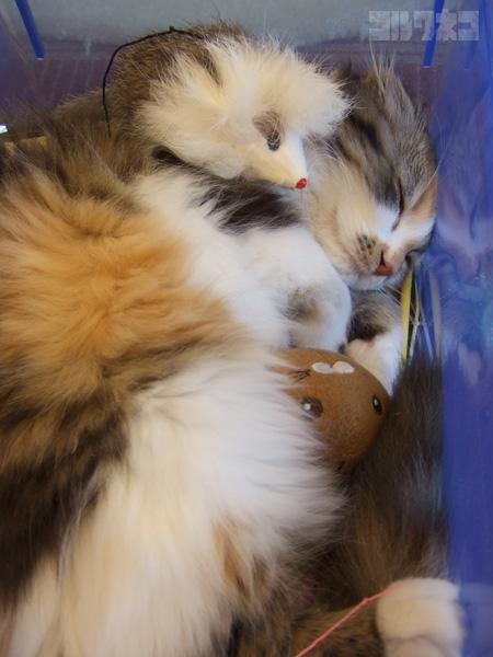 cat052.jpg