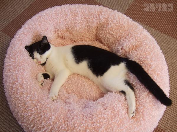 cat053.jpg