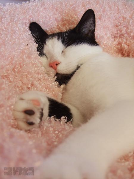 cat054.jpg