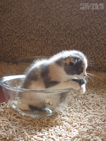 cat058.jpg
