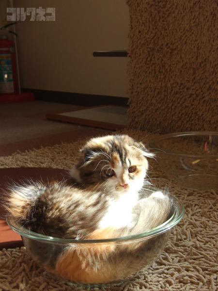 cat060.jpg
