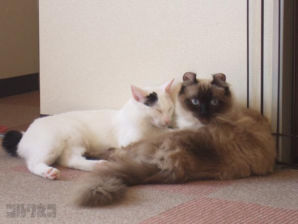 cat062.jpg