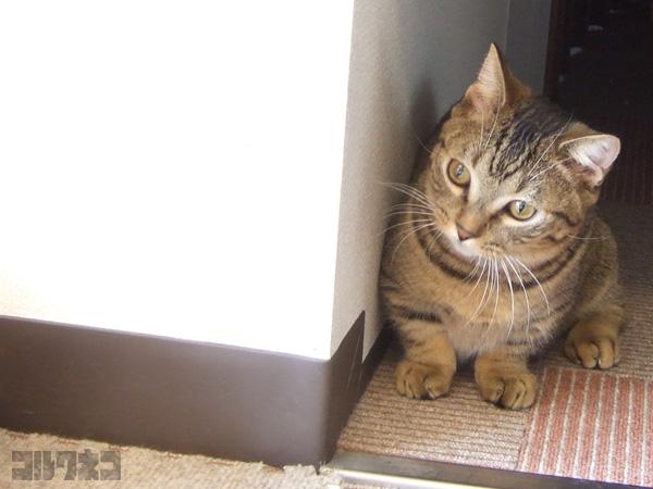 cat063.jpg