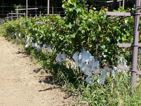 山中湖ワイン