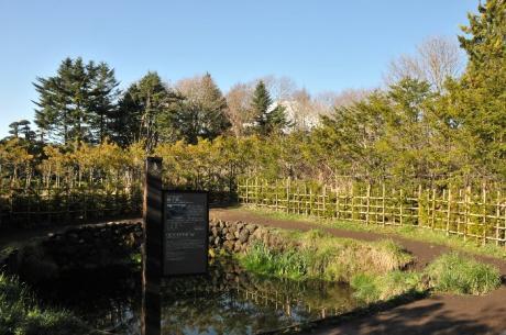 忍野 銚子池