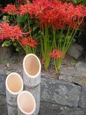 2008.9.28  彼岸花
