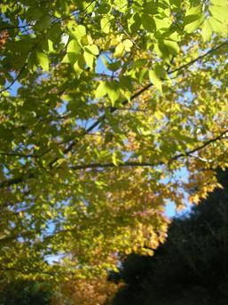 2008.11.4 紅葉