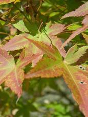 2008.11.4 紅葉2