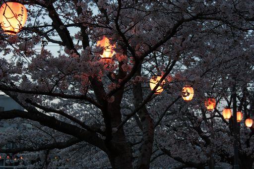ミネノ桜3
