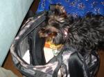 かばんにボールを隠すラビ1