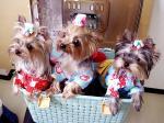 かご入り3人娘お祭り編