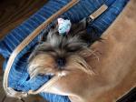 カバン犬寝ました