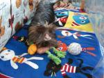 新しいおもちゃ遊ぶラビ