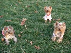 中島公園で3人娘