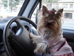 マリが運転します