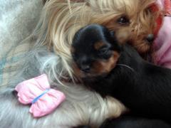 マリと赤ちゃん