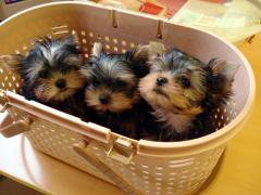 カゴの中の赤ちゃんズ