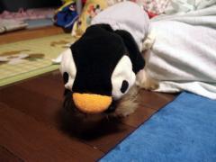 ペンギンちゃん?