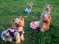 公園で4人娘
