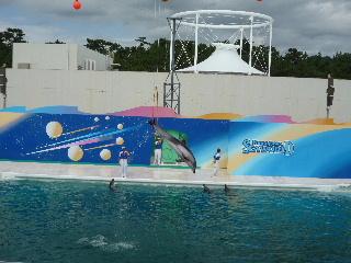 Dolphin show1