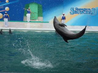 Dolphin show2