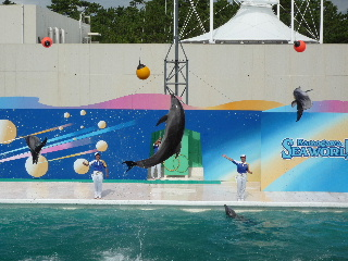 Dolphin show4