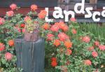 薔薇と看板
