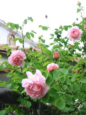 薔薇ぞの3