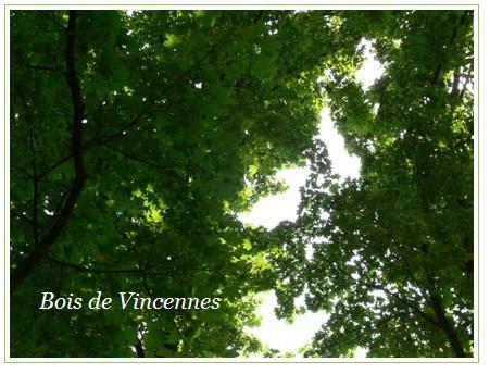bois de vincennes 4