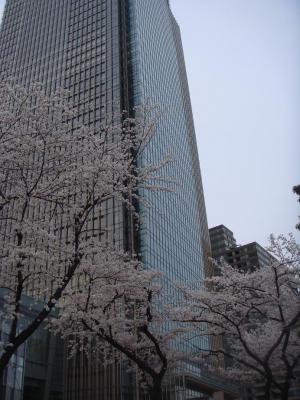 2008,3,29 ミッドタウンでお花見1