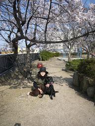 P1050382  sakuradaisy